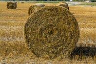 rolncitwo, przemysł agralny